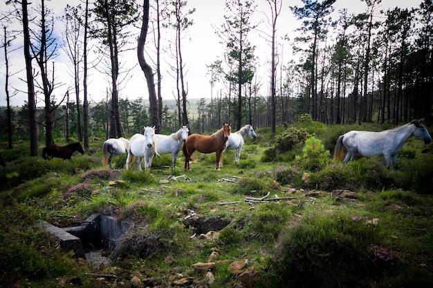 Nahaufnahme von weißen und braunen pferden in einem wald mit knapper baumdichte und grünem gras