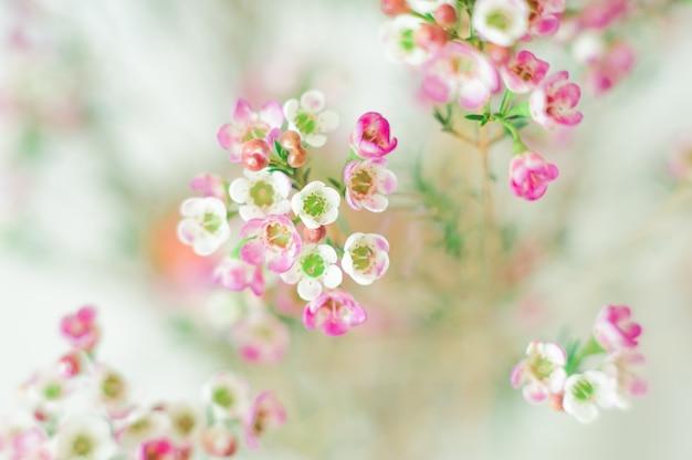 Nahaufnahme von weißen und rosa blumen