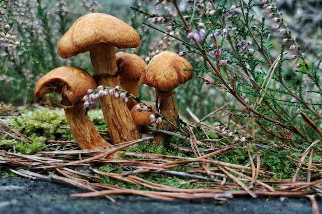 Nahaufnahme von wilden pilzen in einem wald bedeckt in zweigen und blumen