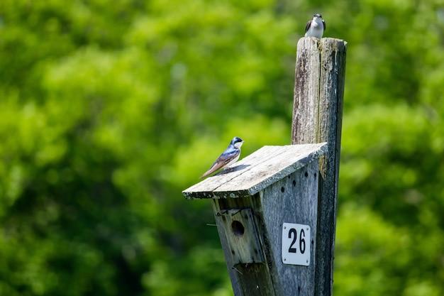 Nahaufnahme von zwei kleinen vögeln, die um das vogelnest sitzen