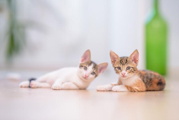 Nahaufnahme von zwei niedlichen kätzchen, die auf dem boden mit einem verschwommenen hintergrund liegen