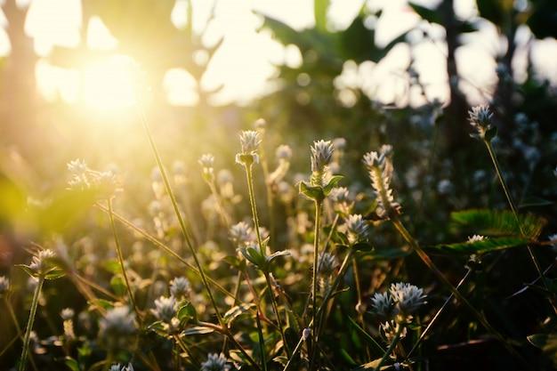 Nahaufnahme-wassertropfen auf blumengras und sonnenaufganghintergrund am morgen
