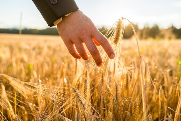 Nahaufnahmeansicht der männlichen hand im geschäftsanzug, der ein goldenes weizenohr berührt