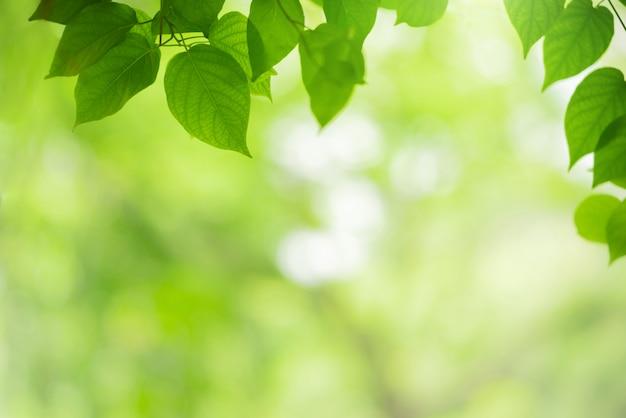 Nahaufnahmeansicht der natürlichen grünen blattfarbe unter sonnenlichthintergrund