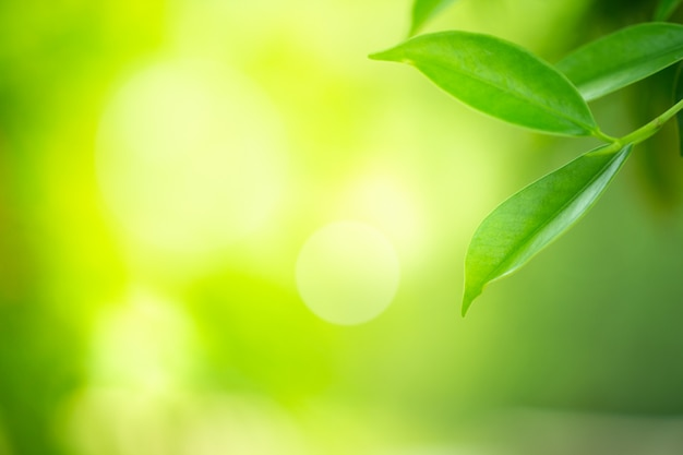 Nahaufnahmeansicht des grünen blattes mit schönheit bokeh unter sonnenlicht