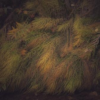 Nahaufnahmeaufnahme der bunten wilden pflanzen, die auf dem boden liegen