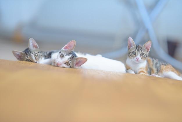 Nahaufnahmeaufnahme der entzückenden kleinen inländischen kätzchen, die auf einer couch liegen