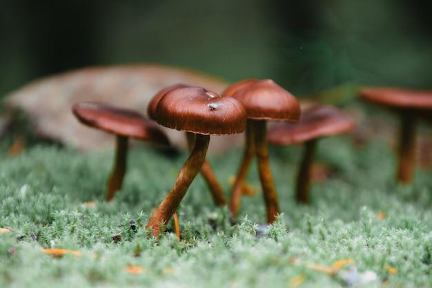 Nahaufnahmeaufnahme der glänzenden kleinen pilze, die von einer oberfläche wachsen, die mit grünem moos bedeckt ist