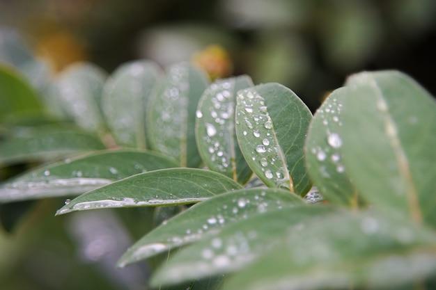 Nahaufnahmeaufnahme der grünen blätter bedeckt mit tautropfen