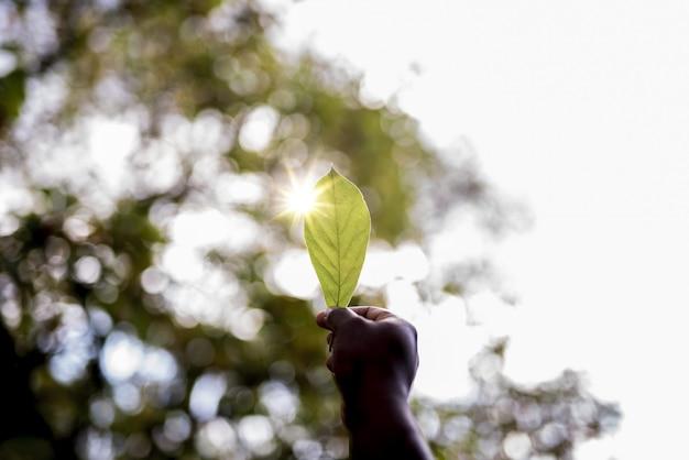 Nahaufnahmeaufnahme der hand eines mannes, die ein grünes blatt mit einem unscharfen hintergrund hält