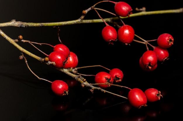 Nahaufnahmeaufnahme der roten hagebutten, die auf dem zweig wachsen