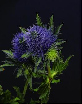 Nahaufnahmeaufnahme der schönen blumen mit den blauen violetten blütenblättern