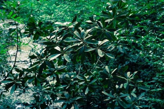 Nahaufnahmeaufnahme der schönen großen pflanzen und blätter in einem wald
