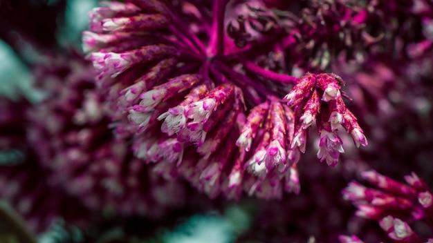 Nahaufnahmeaufnahme der schönen lila glockenblumen auf einer unscharfen oberfläche