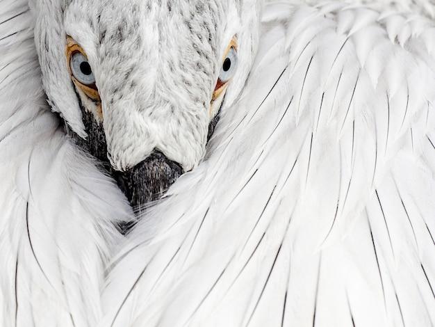 Nahaufnahmeaufnahme der weißen federn eines wilden vogels