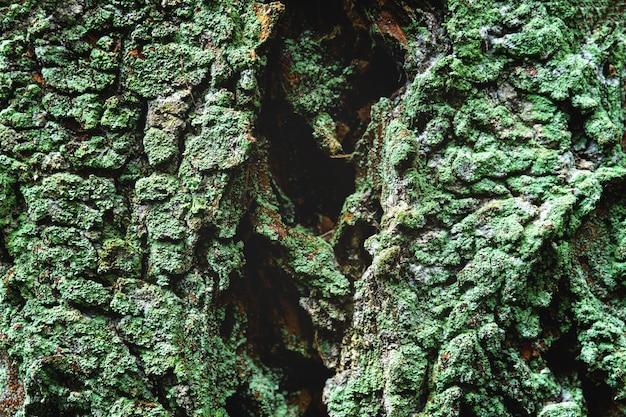 Nahaufnahmeaufnahme des grünen mooses, das die rinde eines baumes wächst