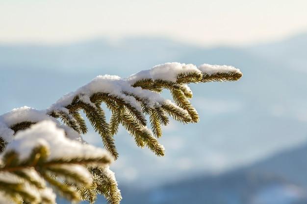 Nahaufnahmeaufnahme des kiefernzweigs mit grünen nadeln bedeckt mit tiefem frischem sauberem schnee auf unscharfem blauem kopierraumhintergrund im freien. frohe weihnachten und ein frohes neues jahr grußpostkarte.