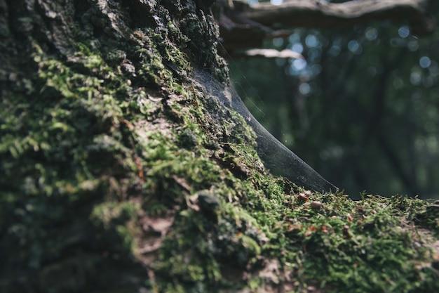 Nahaufnahmeaufnahme des spinnennetzes auf einem baumstamm