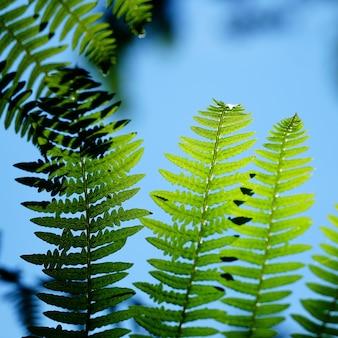 Nahaufnahmeaufnahme des wachsens der grünen pflanzen unter einem klaren blauen himmel
