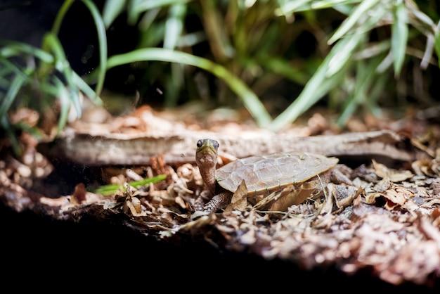 Nahaufnahmeaufnahme einer babyteichschildkröte am ufer