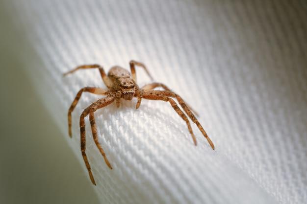 Nahaufnahmeaufnahme einer braunen spinne auf weißem stoff