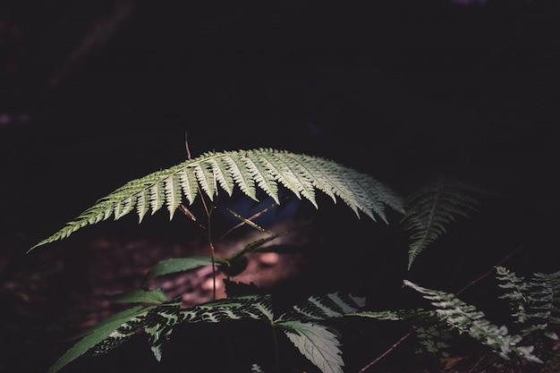 Nahaufnahmeaufnahme einer farnpflanze in einem dschungel unter dem mondlicht