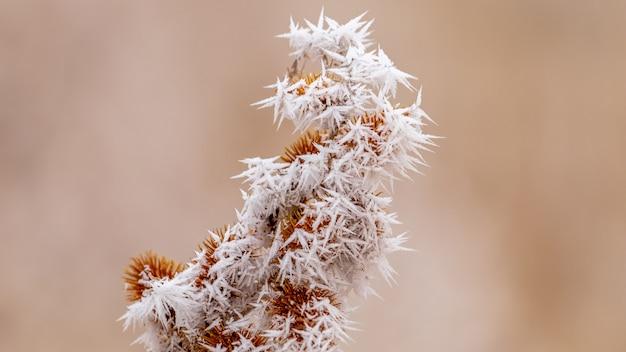 Nahaufnahmeaufnahme einer gefrorenen pflanze mit kleinem eis, das sich um sie herum bildet