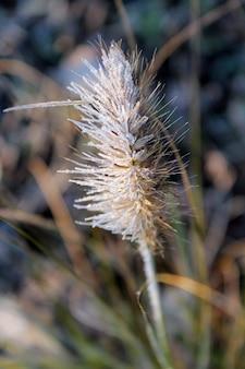 Nahaufnahmeaufnahme einer gefrosteten pflanze mit einem unscharfen hintergrund