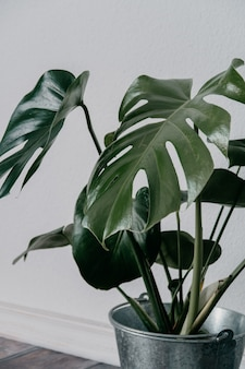 Nahaufnahmeaufnahme einer grünen künstlichen zimmerpflanze