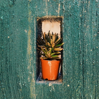 Nahaufnahmeaufnahme einer grünen pflanze in einem topf auf einer öffnung in einer blauen betonwand