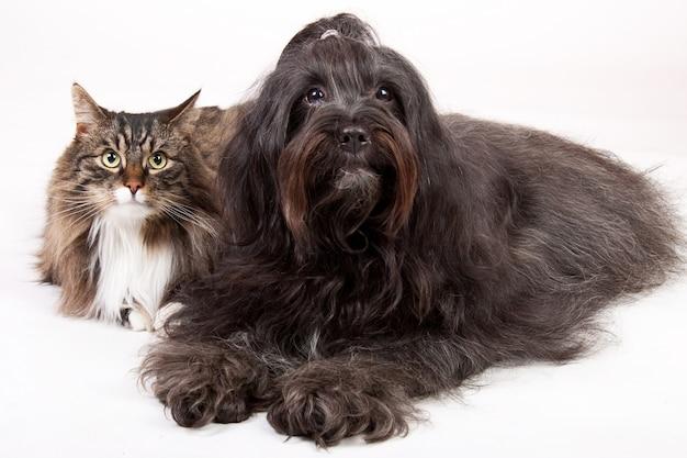 Nahaufnahmeaufnahme einer katze und eines hundes lokalisiert auf weiß
