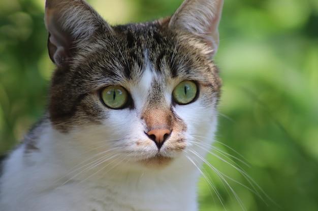 Nahaufnahmeaufnahme einer niedlichen katze, die in der ferne mit einem unscharfen hintergrund schaut