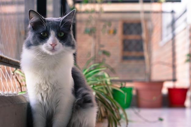 Nahaufnahmeaufnahme einer niedlichen schwarzweiss-katze, die nahe dem fenster mit einem unscharfen hintergrund sitzt