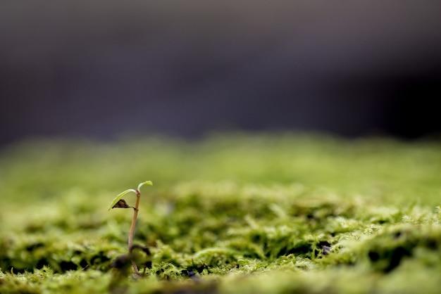 Nahaufnahmeaufnahme einer pflanze, die in einem moosigen boden mit einem unscharfen hintergrund wächst - konzept, das aufwächst