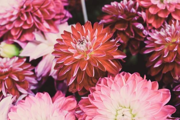 Nahaufnahmeaufnahme einer schönen blumenkomposition mit bunten dahlienblumen
