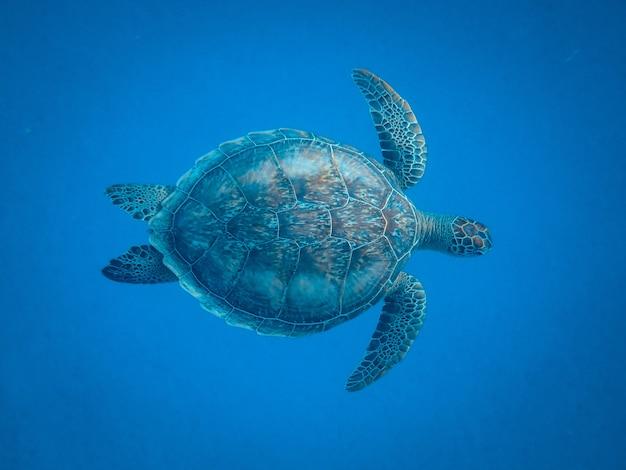 Nahaufnahmeaufnahme einer schönen schildkröte, die unter dem meer schwimmt