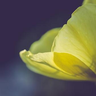 Nahaufnahmeaufnahme einer schönen wilden blume, die in einem feld mit etwas morgentau blüht, der auf ihm übrig bleibt
