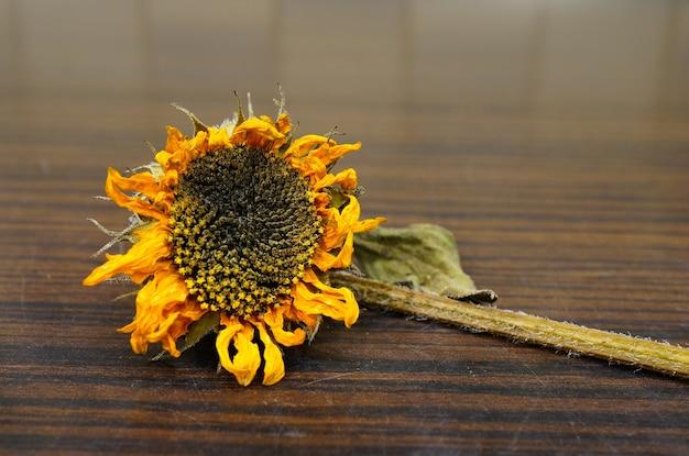 Nahaufnahmeaufnahme einer trockenen sonnenblume auf einer hölzernen oberfläche