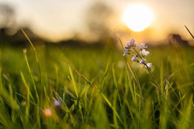 Nahaufnahmeaufnahme einer winzigen blume, die im frischen grünen gras mit einem unscharfen hintergrund wächst