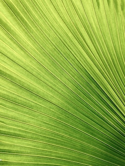 Nahaufnahmeaufnahme eines gelbgrünen farbpalmenblattes