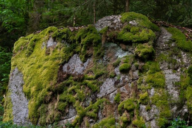 Nahaufnahmeaufnahme eines großen steins bedeckt mit einem grünen moos im wald