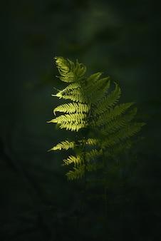 Nahaufnahmeaufnahme eines grünen pflanzenzweigs mit einer unscharfen dunkelheit
