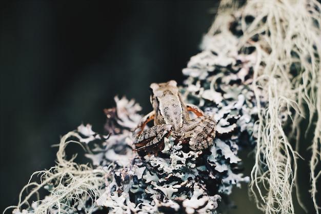 Nahaufnahmeaufnahme eines kleinen frosches, der auf einem zweig sitzt
