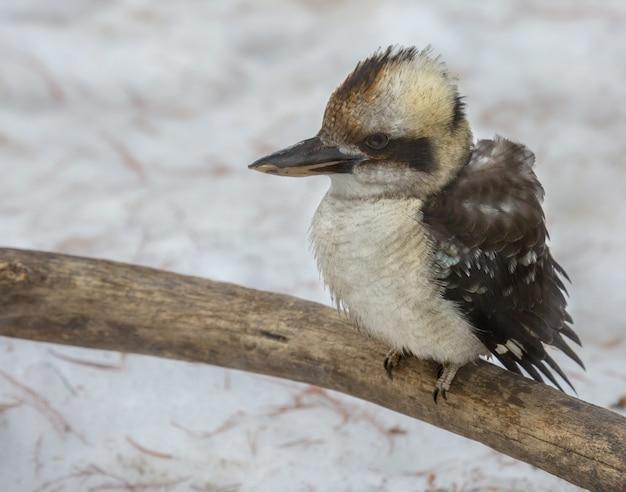 Nahaufnahmeaufnahme eines kleinen seevogels, der auf einem zweig sitzt