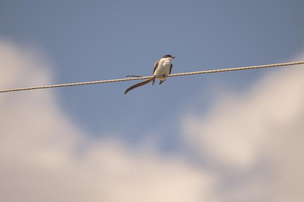 Nahaufnahmeaufnahme eines kleinen vogels, der auf einem seil sitzt