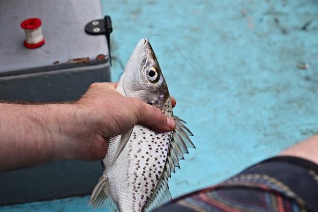 Nahaufnahmeaufnahme eines mannes, der einen gefangenen fisch tötet