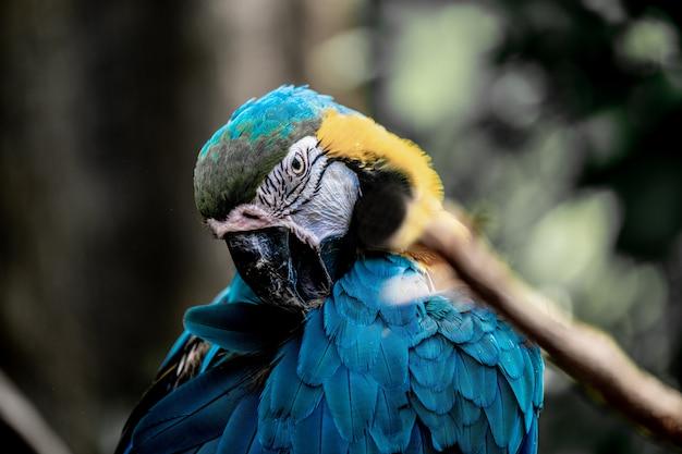 Nahaufnahmeaufnahme eines niedlichen ara-papageis mit hypnotisierenden federn
