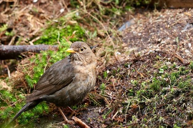 Nahaufnahmeaufnahme eines niedlichen haussperlingvogels in einem wald