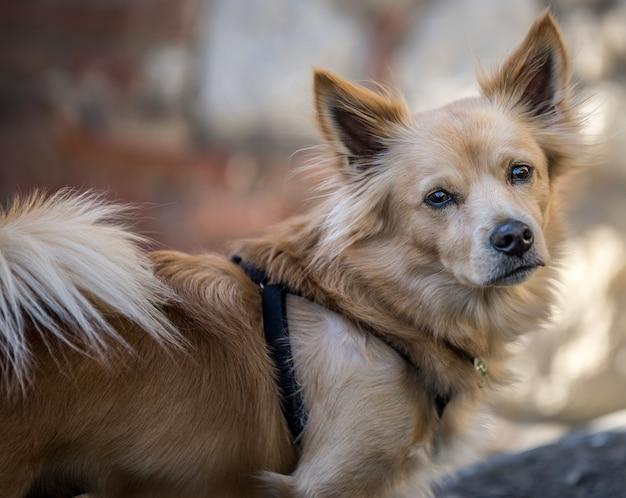 Nahaufnahmeaufnahme eines niedlichen hundes, der die kamera mit einem unscharfen hintergrund betrachtet