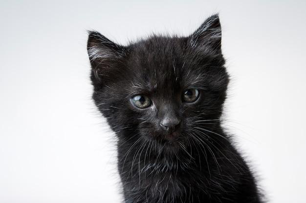 Nahaufnahmeaufnahme eines niedlichen schwarzen kätzchens lokalisiert auf einem weißen